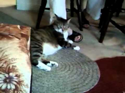 Foot-licking Cat.3gp video