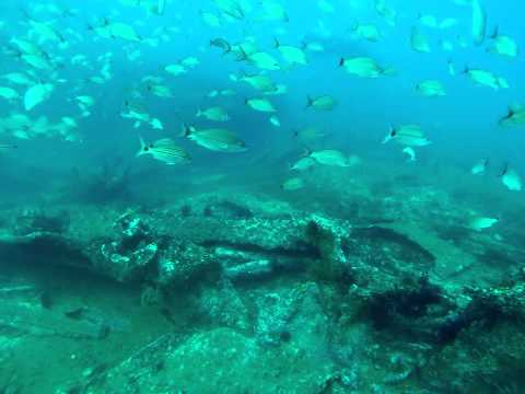 Sand Tiger Sharks on the Caribsea wreck on June 8, 2015