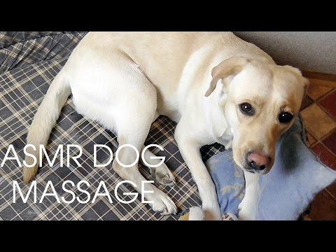 ASMR Relaxing Dog/Pet Massage ♥♥♥