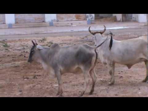 Kisi Nazar Ko Tera Intezar Aj Bhi Hai a Comedy