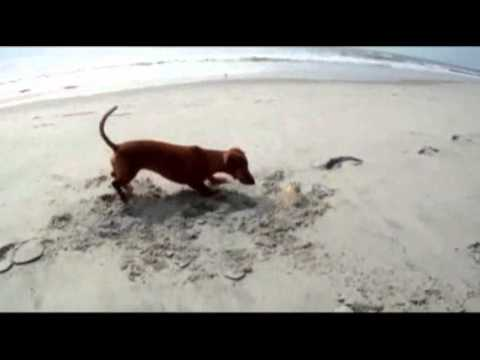 Raw Video: Playful Pup Meets Crab on Beach