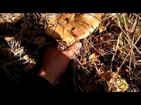 Секс в лесу по грибы 15 фотография