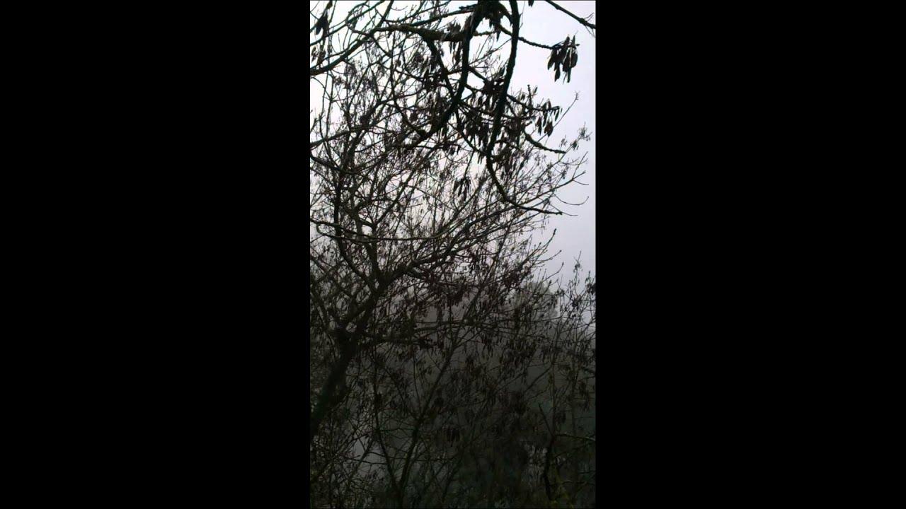 Nid de frelons asiatique youtube - Petit nid de frelon ...