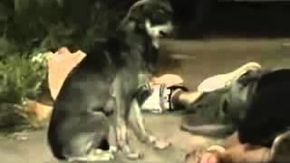 Cachorro chora ao ver seu dono que morreu