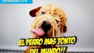 El Perro mas tonto del Mundo #whatdafaqshow