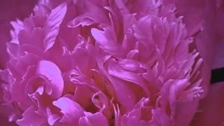 Meine Blume Blüht (05-32) Musik Siegfried Zabransky