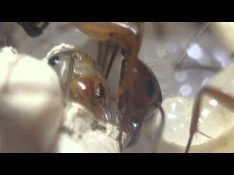 Video Play With Ants 1