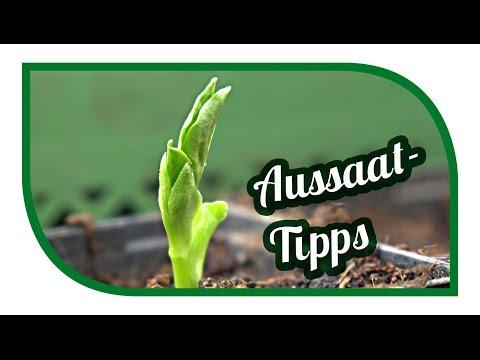 Aussaat Tipps | Jungpflanzenanzucht im März | erste Freilandaussaaten