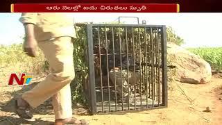 ఉత్తర తెలంగాణలో చిరుతలకు కష్టకాలం | ఆరు నెలల్లో ఐదు చిరుతలు మృతి | Tigers Disappearing in Telangana
