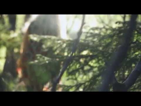 Kajak - Gold Crowned Eagle (Official Video)