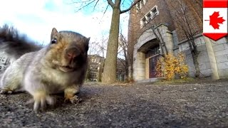 [Squirrel steals GoPro camera baited with bread and takes it ...] Video