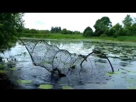 вентерь рыболовный что это такое