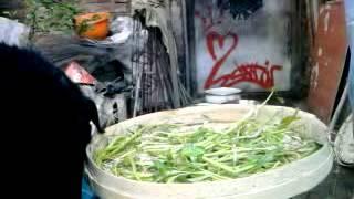 anjing pemakan sayuran