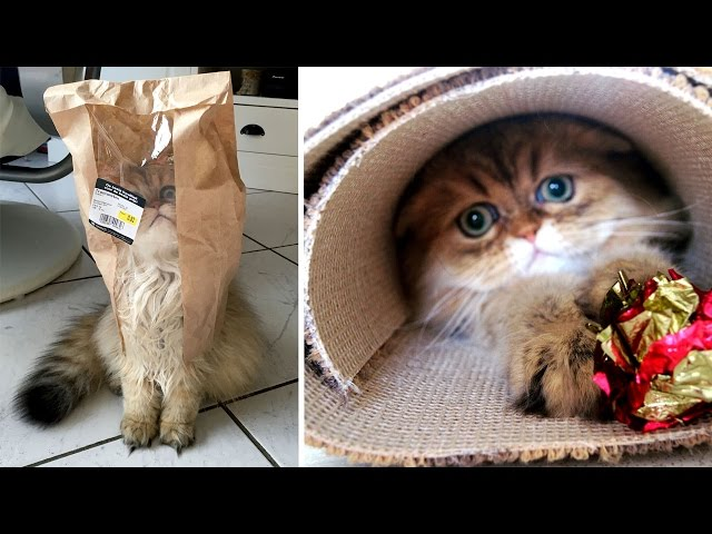 Adorable Cat Loves Playing Hide And Seek