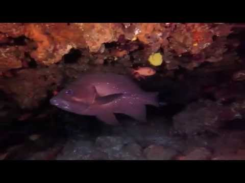 Diving Ponta do Ouro - Mozambique - Steps Reef - Back to Basics Adventures