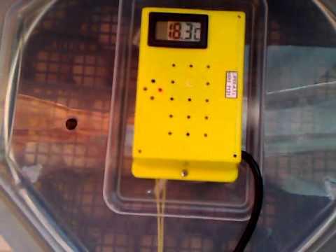 Tutorial incubator CLEO 5 cu dispozitiv de intoarcere