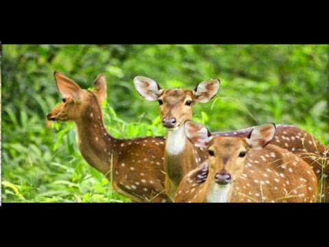 Wildlife in India -  A short film on Wayanad Wildlife Sanctuary India