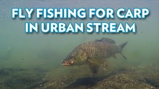 Fly Fishing for Carp in Urban Stream