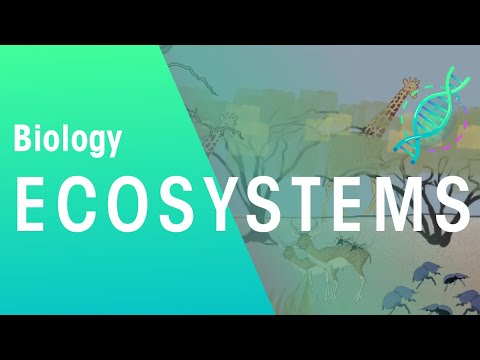 What is an ecosystem? | Ecology and Environment | the virtual school