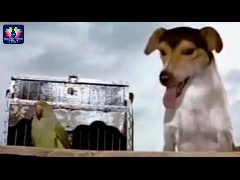 Street Dog And Parret Funny Comedy Scene    Latest Telugu Comedy Scenes    TFC Comedy