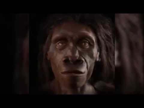 Human face evolution in the last 6 million years