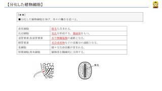 分化した植物細胞