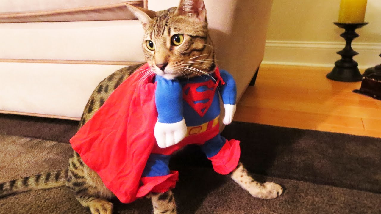 funny superman pictures