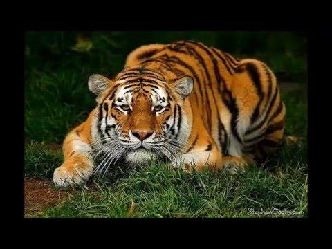 Hayvanlar İle İnsanlar Arasındaki 14 Benzerlik