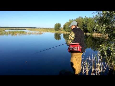 OmskSpinClub # 1 Рыбалка в Омской области, Любинская старица  Спиннинговая ловля щуки
