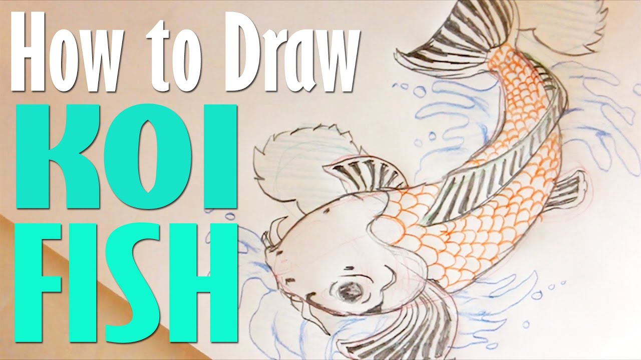 How to draw koi fish