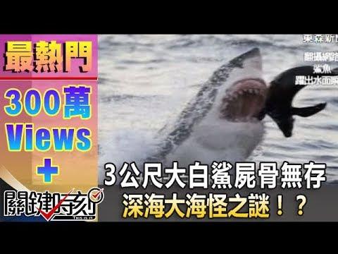 一尾3公尺大白鯊就這樣屍骨無存 深海大海怪之謎!?20140609-1