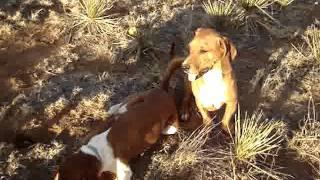 Bugsy And Daisy
