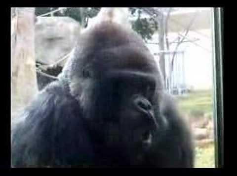 王子動物園 ゴリラ