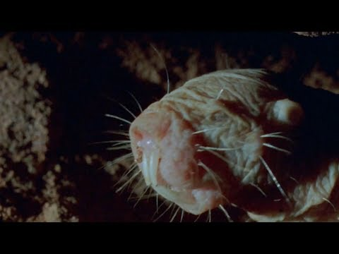 True Facts About The Naked Mole Rat
