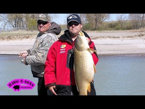 BIGGEST Carp Fishing Chicago Illinois April 28 - HawgNSonsTV