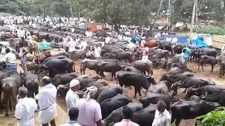 Edakkara chantha എടക്കര ചന്ത