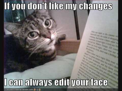 Comic Pictures of Cats Comical Cats