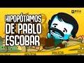 Os Hipopótamos De Pablo Escobar Mega Curioso mp3
