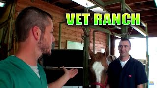New Large Animal Vet on Vet Ranch!