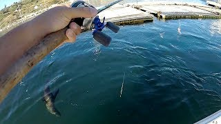 WEIRDEST Creature I've EVER Caught while Fishing!!!