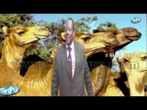 Prof; Dalxa heestii Shankaroon OFFICIAL VIDEO by SNTV