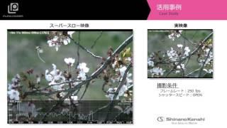 ハイスピードカメラ+解析アプリ「桜にとまるハチの動体追尾」
