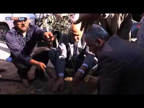 حملة لغرس نصف مليون شجرة بغزة