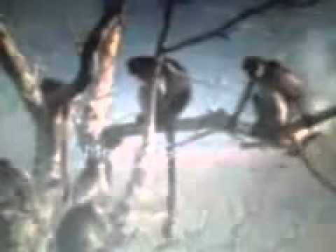 Sex Monkey Punjabi Style - Youtube.flv video