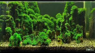 Timelaps aquascaping: Dark Fissidens Mountains - English subs