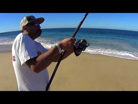 Cabo San Lucas Surf Fishing  Sierra macks and 250# Lemon Shark