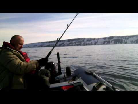 рыбалка на баренцевом море самостоятельно
