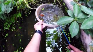 Bất ngờ khi dọn bể cá sau 1 năm không thay nước