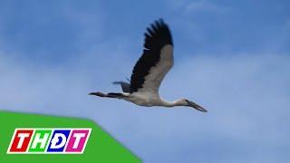 Cận cảnh sân chim sinh sản tại VQG Tràm Chim | THDT