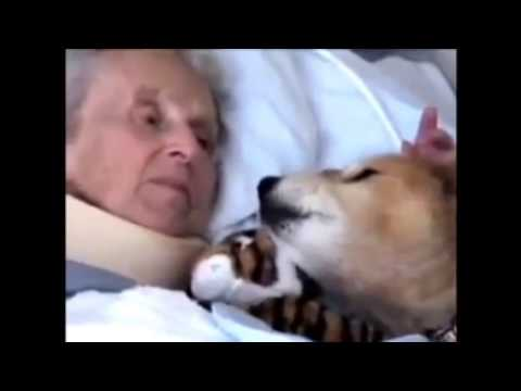 Amore Tra Donna E Il Suo Cane video